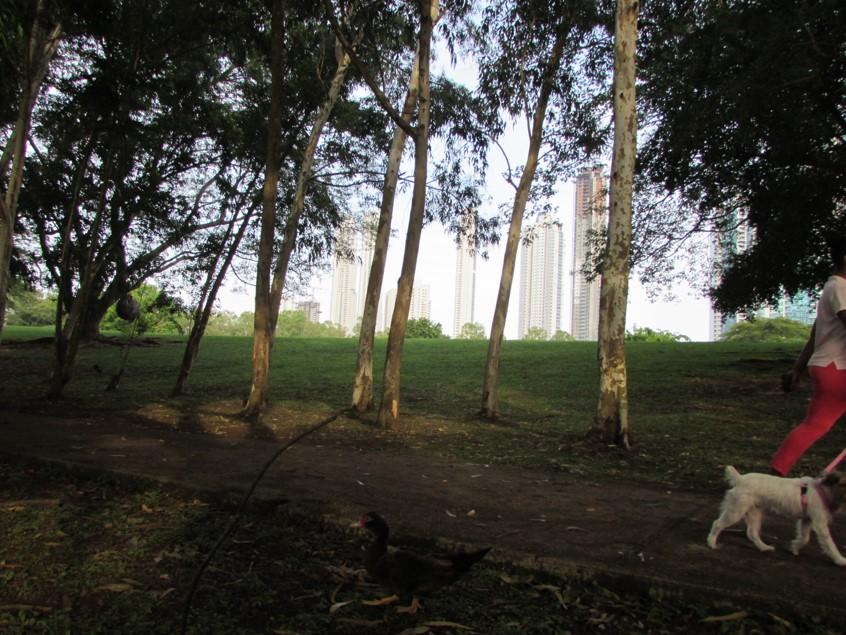 El parque de CDE es una finca privada que sin embargo, está abierta al público para brinda un amplio lugar de espacimiento   Foto: Aydana Ruiz