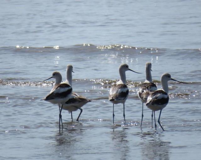 Foto: Audubon Panamá