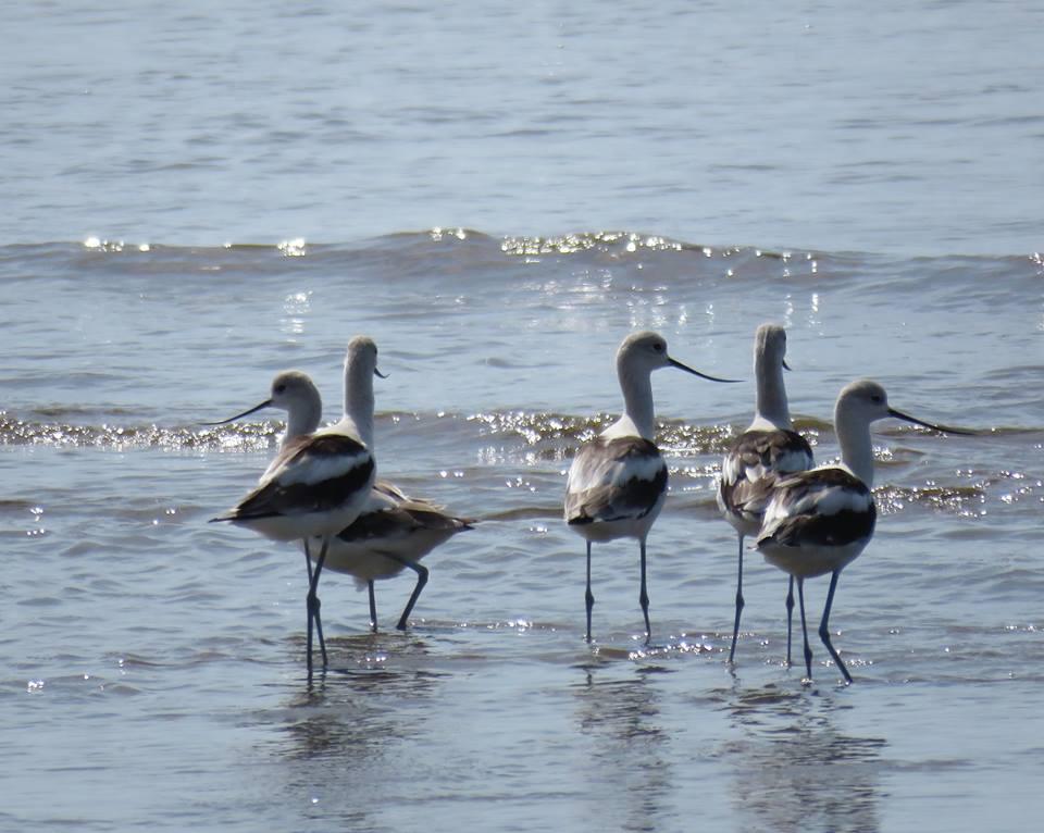 El Humedal Bahía de Panamá cuenta con 295 especies de plantas, 141 especies de mamíferos, más de 200 especies de aves, 50 especies de reptiles, 47 especies de anfibios, 74 especies de peces y 27 especies de invertebrados. | oto: Audubon Panamá