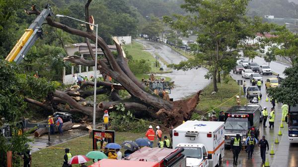 La caída de árboles afectó vehículos, casas y carreteras. Un niño murió al desplomarse uno, sobre el carro en el que viajaba | Foto: EFE