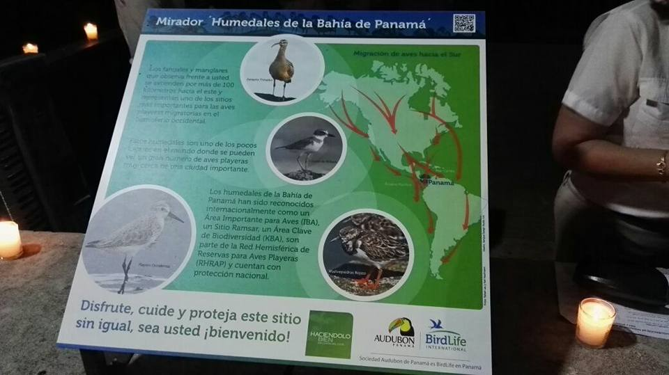 Todos los años, expertos en el estudio de aves playeras de todo el continente, vienen a Panamá y visitan CDE para monitorear miles de especies que utilizan el lugar como su refugio de subsistencia y hogar.