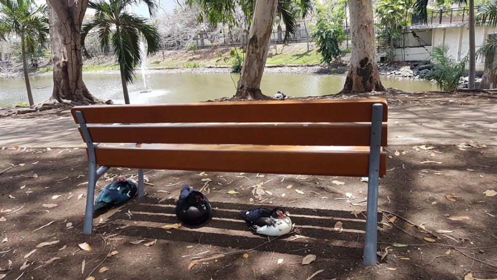 Varias bancas como esta, fueron colocadas en el parque. Ahora es mucho más cómodo alimentar a os patos, disfrutar de la naturaleza y descansar después de una caminata | Foto: Olga Urbina