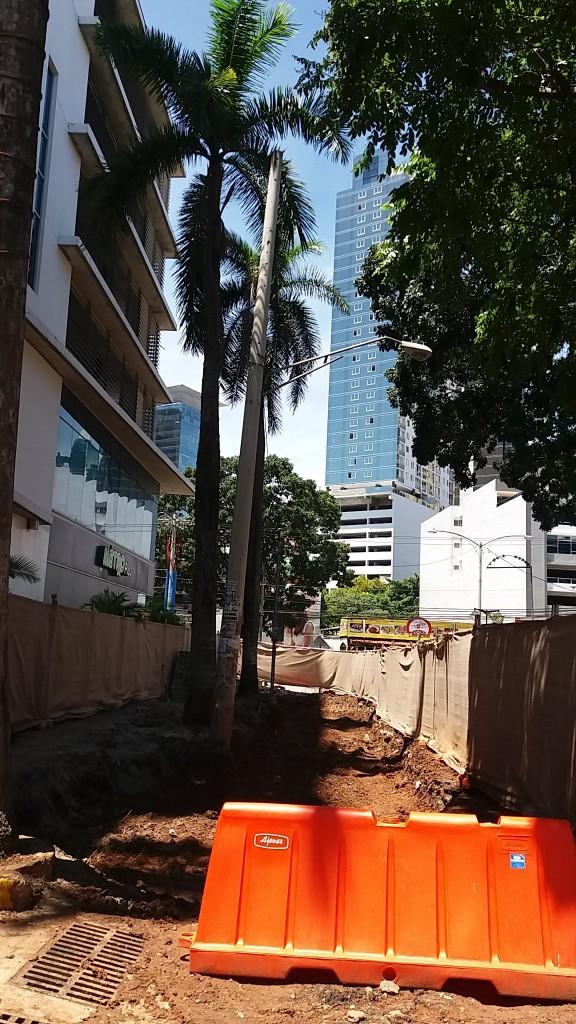 Alcaldía había procurado preservar la mayor cantidad de palmeras al principio de la obra