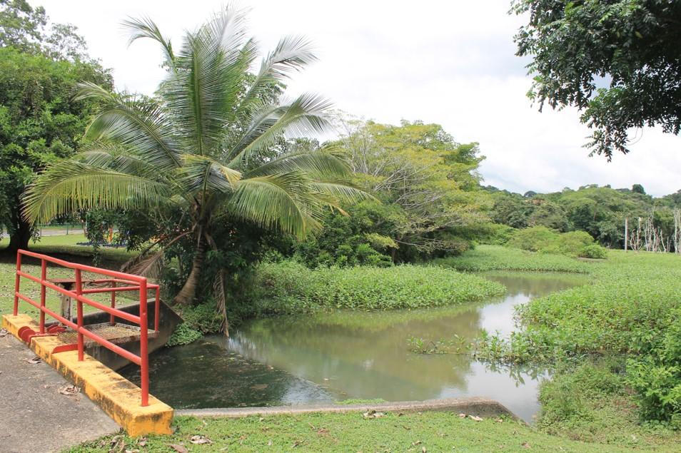Estos senderos hoy urbanizados fueron caminos que dieron a Panamá un rol histórico en el continente.